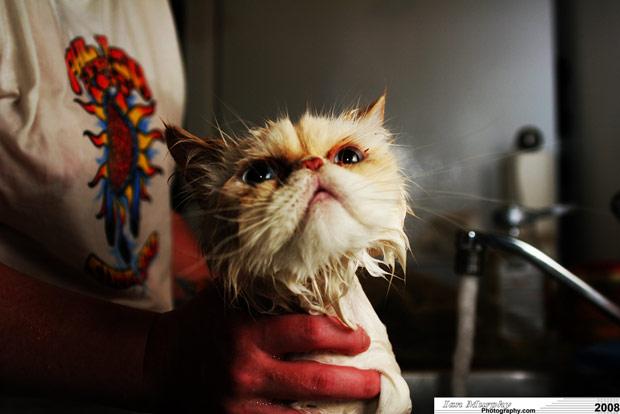 Bathing a furry cat