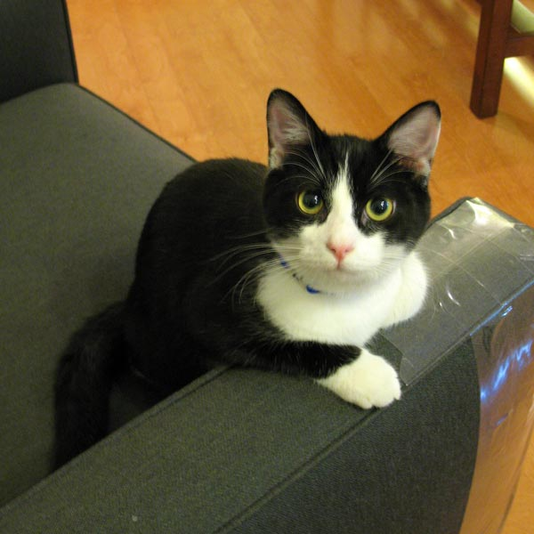 How To Stop Cats From Scratching Furniture Cat On The Web